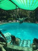 Bellyflop competition